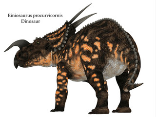 Einiosaurus Dinosaur Tail with Font - Einiosaurus was a Ceratopsian herbivore dinosaur that lived during the Cretaceous Period in North America.