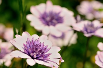 Close up of pink flowers in bloom
