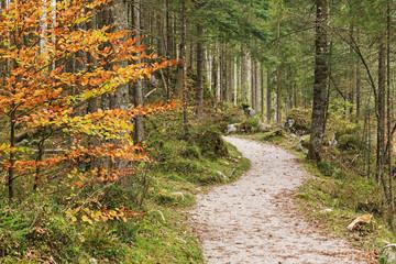 Wanderweg durch den Zauberwald am Hintersee in Bayern, Ramsau bei Berchtesgaden