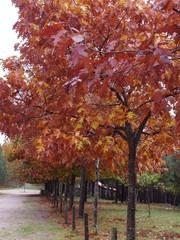 Garden Poster Bordeaux árboles otoñales de un precioso paseo