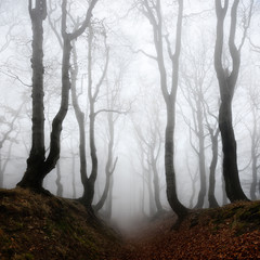 Haunted Forest, Sunken Lane through of Spooky Trees in Thick Fog