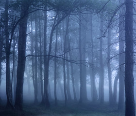 Dark foggy woods