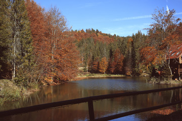 Beautiful landscape with forest near river on sunny day
