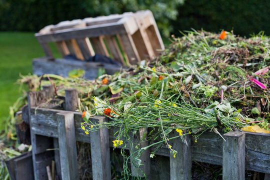 Organic compost in the permaculture farm  - sustainable food forest production.
