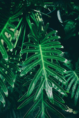 tropical green leaves nature background