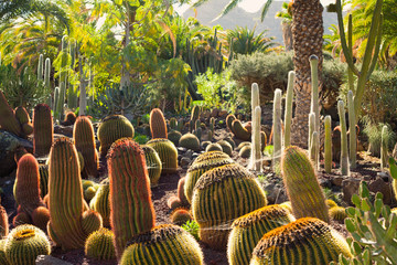 Fotobehang Canarische Eilanden Cacti Green spring landscape on Canary Islands