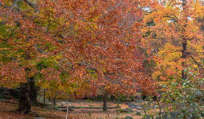 Deep Red, Orange, Yellow, and Green Foliage on a Serene Autumn Lanscape