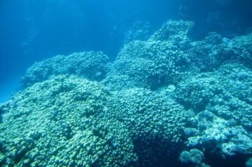 Vues depuis un bateau semi-immergé à calle en verre : Fonds sous-marins de la mer Rouge (Egypte)
