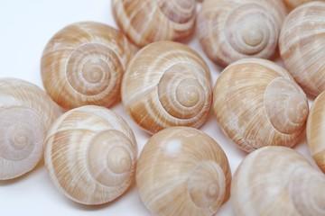 エスカルゴの殻