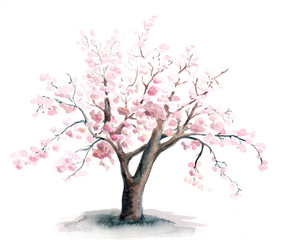 Watercolor painting of the sakura tree with pink flowers