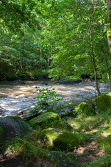Orne river gorge,  river in the forest in France.