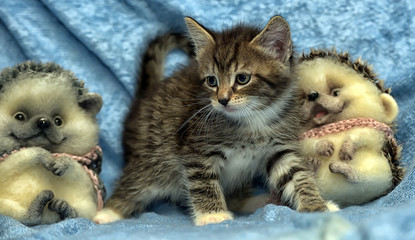 Kitten with a toys