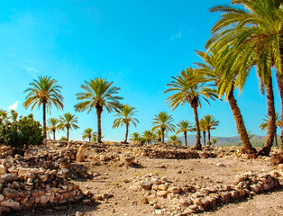 Date palms among the ruins against the sky