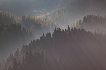 Wall Murals Morning with fog sun-rays through misty pine forest