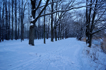 Snowy road and ski track in the park with bare trees on the sides