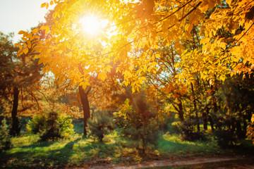 Autumn nature landscape in sunny park