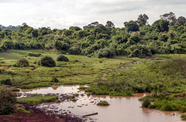 Lake in the jungle of Kenya under a cloudy sky Wall mural