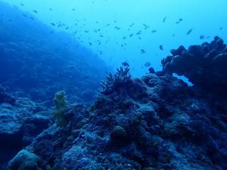 Photo sur Aluminium Recifs coralliens 海中写真