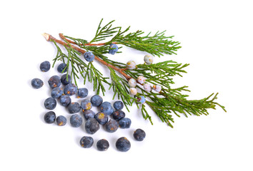 Cones and leaves of Juniper isolated on white background