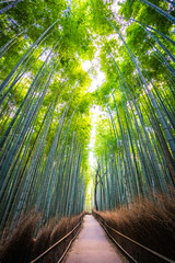 Photo sur Plexiglas Bambou Beautiful landscape of bamboo grove in the forest at Arashiyama kyoto