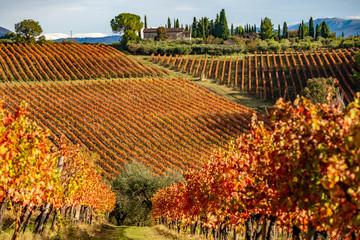 Poster Wijngaard Sagrantino di Montefalco, colorful Vineyards in autumn, Umbria, Italy