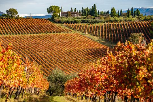 Sagrantino di Montefalco, colorful Vineyards in autumn, Umbria, Italy