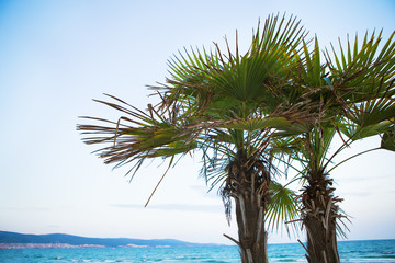 beautiful green palm tree on the beach near the sea.