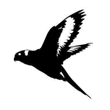 lorikeet silhouette vector