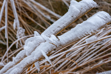 Galaverna, fili d'erba ghiacciati