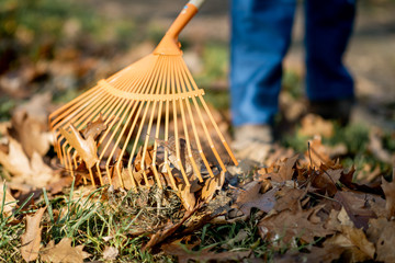 Man sweeping leaves with orange rake on the lawn, close-up view with no face