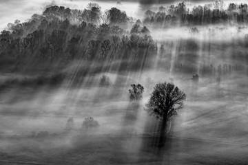 Controluce all'alba sulla foresta
