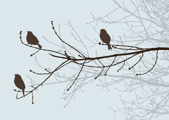 Birds silhouettes on the tree branches