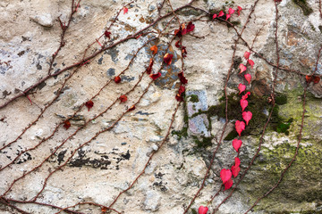 creeper on stone wall