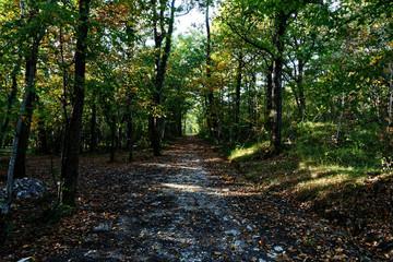 Paysage forêt
