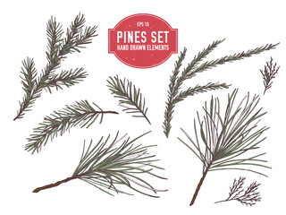 Vector collection of hand drawn colored  pine branch, spruce, redwood