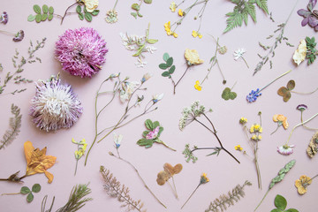 Various dried flowers and leaves on pastel background. Flat lay. .Minimal floral postcard.