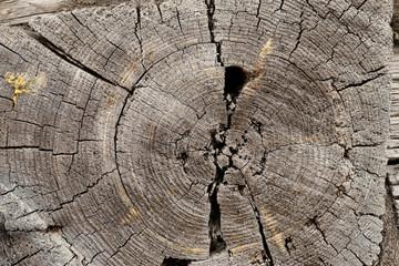 very old log