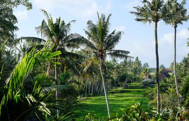 Jungle in Bali, Ubud