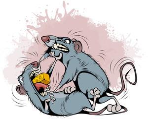 Rats fighting over prey