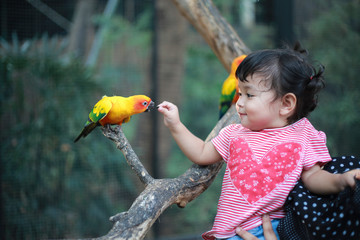 An Asian little cute girl is feeding the bird in the zoo with happiness. Childhood and hand heeding concept.