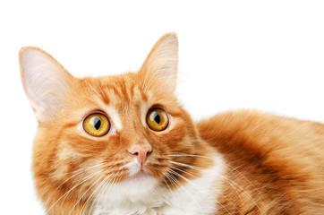Ginger tabby lying surprised cat