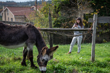 Young girl photographing a donkey with her mobile phone