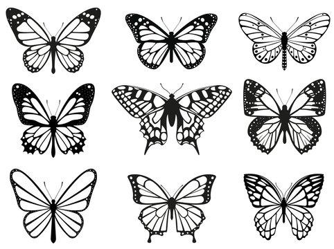 Different butterflies set. Vector illustration