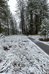 View of footpath passing through snow covered forest