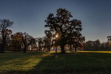 Park in Hamburg im Herbst, tolle Farben