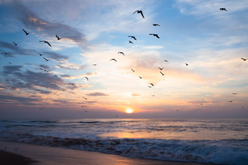 Canvas Prints Bird Beautiful sunset over the sea with flying birds