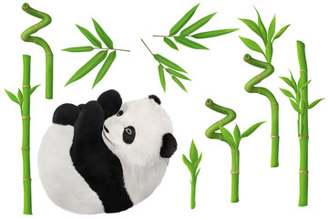 Baby panda and bamboo clip art small kit on white background