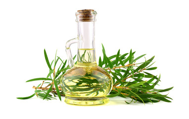 Tea Tree Essential Oil in a Glass Jug (Melaleuca). Isolated on White Background.