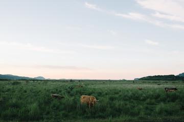 Animals grazing in a field
