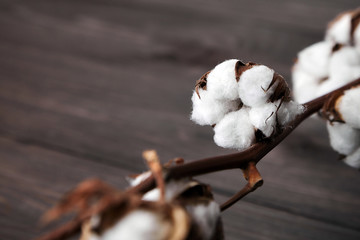 Branch of white fluffy cotton flowers on brown wooden background